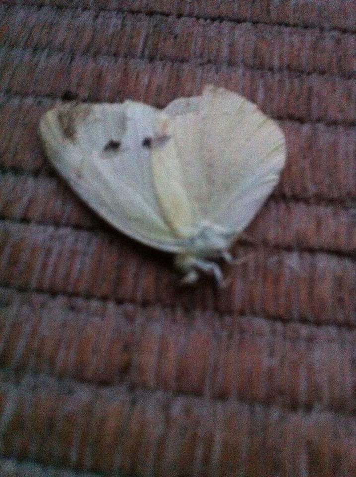 een vlinder op de vloer